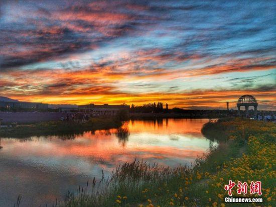 6月30日傍晚,地处甘肃省河西走廊中段的金昌市,霞光漫天,在该市紫金花海景区,五彩霞光辉映满园花朵,色彩斑斓像一幅油画。焦海涛 摄