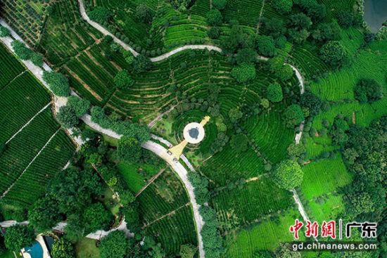 """森林资源与旅游发展融合 """"世界"""