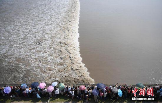 """9月17日,游客争睹""""一线潮""""。当日,钱塘江大潮吸引众多游客观赏。中新社记者 王刚 摄"""