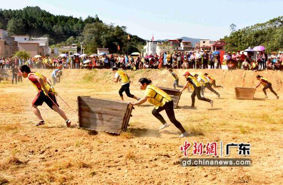 村民们举行拉禾桶比赛。钟欣摄影
