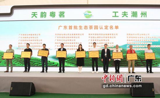 11月9日,第二届广东茶叶产业大会在潮州市举办。姬东 摄