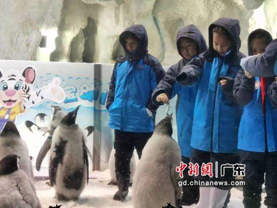 """来自广州和珠海两地的小学生代表化身""""小小保育员""""与小帝企鹅宝宝们零距离接触。邓媛雯摄影"""