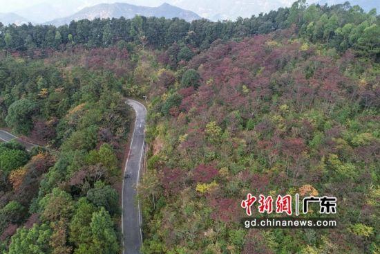 公园内3000多亩红叶已经悄悄变红。 陈骥�F 摄
