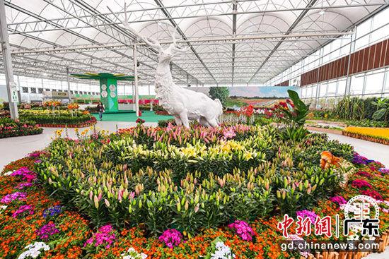 百合花文化周期间,市民游客可观赏到由百合花、蝴蝶兰、郁金香、小盆栽等各式花卉汇成的花海。里水镇宣传文体办供图
