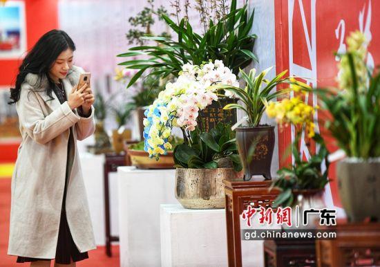 各种珍稀兰花品种展出。通讯员 供图