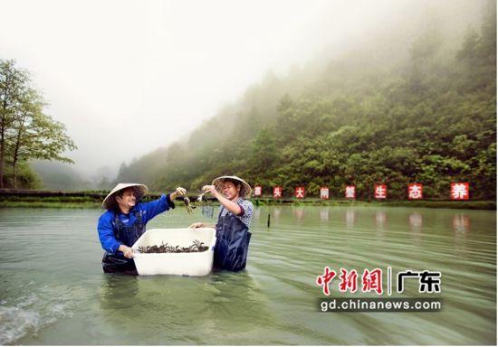 华侨城产业帮扶三穗县寨头村,图为大闸蟹养殖基地。摄影:华侨城集团