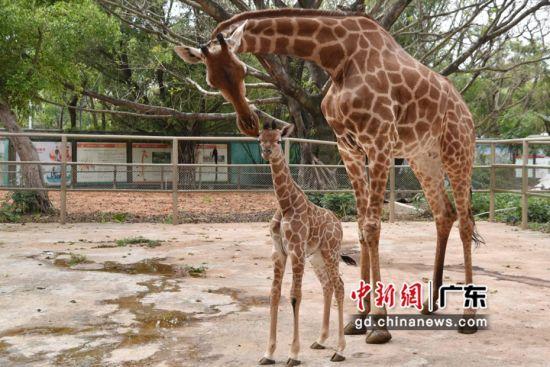 深圳野生动物园将于3月21日恢复开园