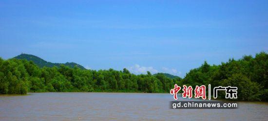 全国连片面积最大的红树林 广东省自然资源厅供图