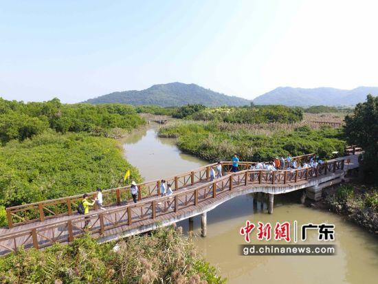 """该片红树林被称为""""网红""""打卡地 广东省自然资源厅供图"""