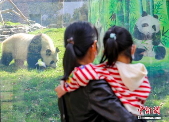 4月22日,游客在武汉动物园内游玩。当日,武汉动物园恢复开放。疫情防控阶段每日限流1.5万人次,采取无接触的售票方式。 中新社记者 张畅 摄