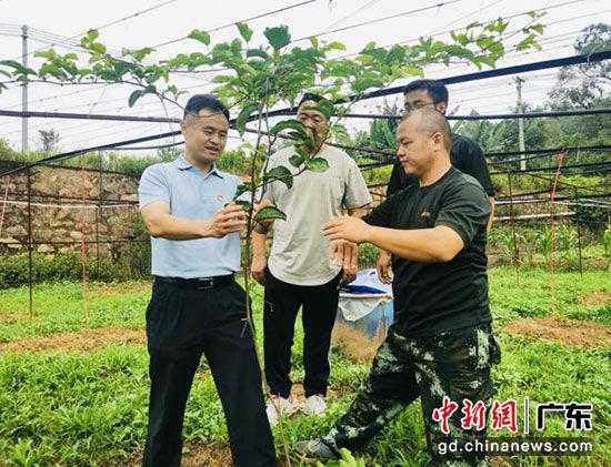 广东省税务局扶贫五华转水镇里塘村 百香果产业带动脱贫致富