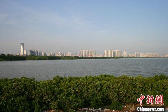 广东省深圳市福田红树林国家重要湿地(资料图)广东省林业局 供图