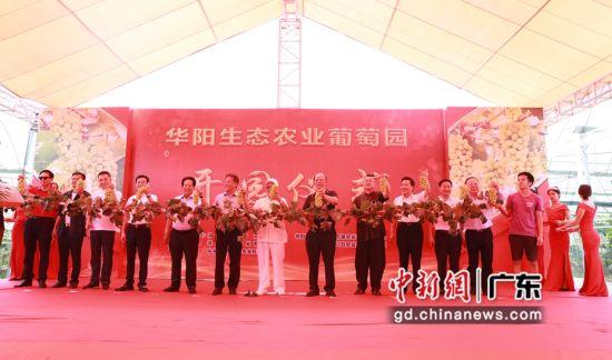 深圳潮商助力家乡振兴 生态园里葡萄丰收