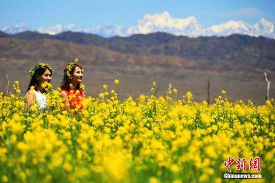 进入7月,天山脚下的新疆托克逊县克尔碱镇通沟村千余亩油菜花进入盛花期,置身花海中,花香四溢,令人心神向往。(李靖海 胡国凯)