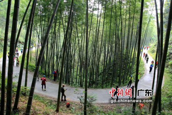 广东省河源市和平县东江缘森林旅游特色线路(资料图)。广东省林业局 供图