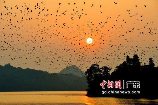 广东省肇庆市星湖湿地公园(资料图) 。广东省林业局 供图