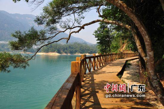 广东一湖边修建的木栈道(资料图)。广东省林业局 供图