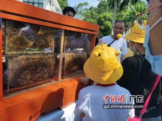 小朋友了解蜜蜂的习性。摄影:郑小红