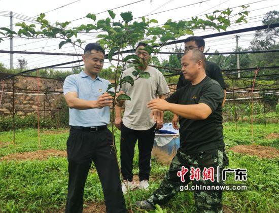 广东省税务局驻里塘村扶贫工作队长兼村第一书记谢沁华指导种植大户种植黄金百香果。岳瑞轩供图