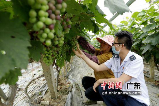 广州市税务服务队走进葡萄园了解种植与经营情况。岳瑞轩供图