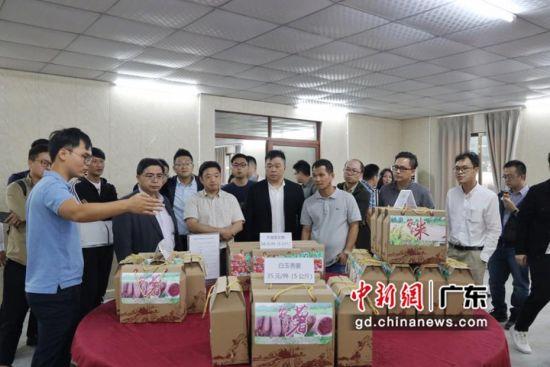 考察团一行正在认真考察了阳西县的扶贫项目。大横琴供图