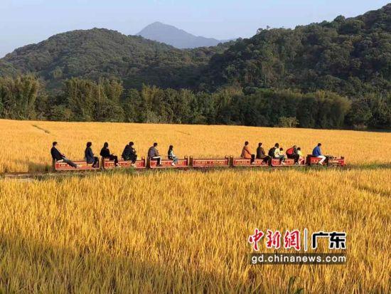 青年团走进广州、清远感受山水之美、人文之秀。梁素雅 摄