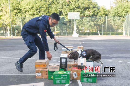 比赛现场考核警犬对特定场所及物品的搜索检查能力。庞舒尹摄影