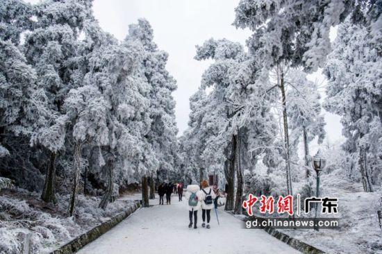 南岳衡山树枝开满了晶莹剔透冰花。通讯员 供图