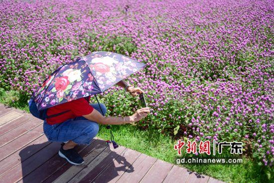 一市民正在花田前拍照。 作者 文国辉(实习生)