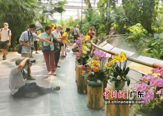 广州市民在华南植物园欣赏兰花 作者 程景伟