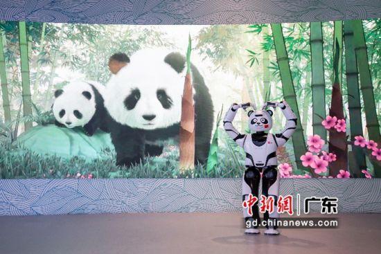熊猫机器人优悠在中国馆熊猫生态长卷展区。钟欣 摄
