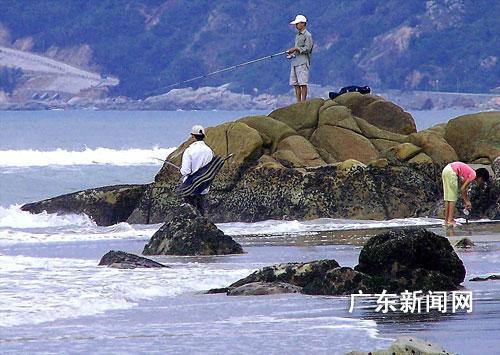 在盛产黄鳍绸的南澳岛云澳海域平缓的沙滩上,记者看到十余名海钓者