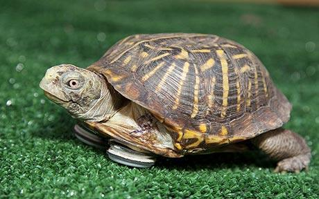 世界上最长寿的乌龟
