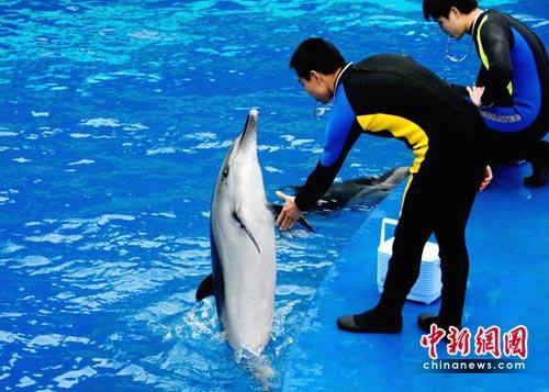 海豚康复训练,采用一对一治疗模式