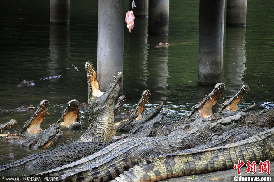 广州鳄鱼公园地址_广州长隆鳄鱼公园成人门票团购广州景点门票