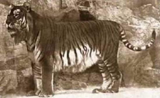 盘点已经灭绝的10种动物:身上有袋子的食肉动物(6)