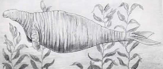动物素描画法步骤海豹